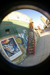 mural fish eye