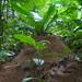 Huge Anthills in the Amazon Rainforest