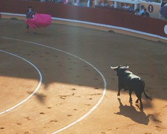 tradition(0.0), performing arts(0.0), animal sports(1.0), cattle-like mammal(1.0), bull(1.0), sports(1.0), bullring(1.0), matador(1.0), performance(1.0), bullfighting(1.0),