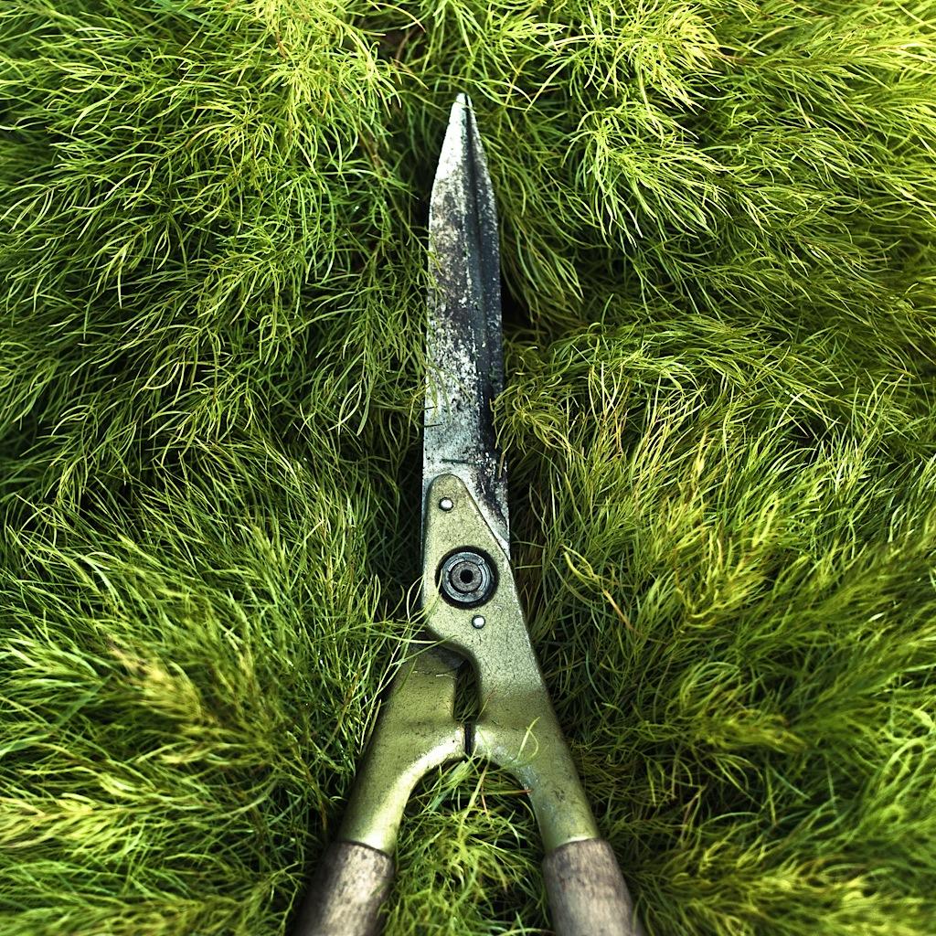 Garden Grass Texture