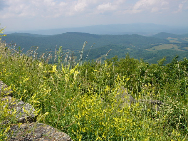 Hawksbill Greenway in Luray and a bear cub on Skyline