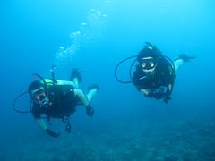 Diving...