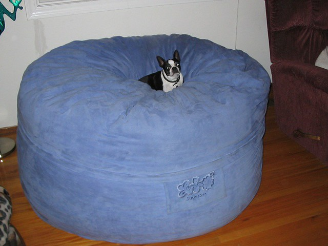 biggest dog bed ever explore goldynkat39s photos on With biggest dog bed