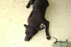Laying stray dog.