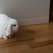 Small photo of Bunny
