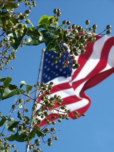 Crape Myrtle in front of Flag