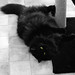 Small photo of Moppet