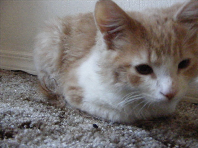 Fuzzy Kitten Games Room Mating