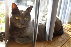 Artemis in the blinds