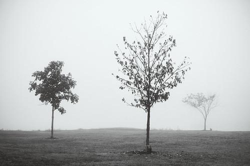 trees fog sunrise nikond50 nikkor50mmf18 threetrees foggymorning columbiamissouri twinlakespark