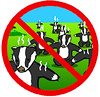 No steenkeeng badgers