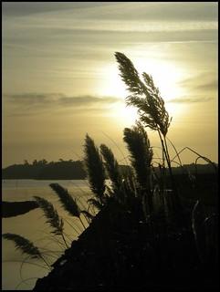 paysage/Bretagne/Paimpol/(22)