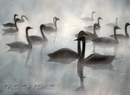 Swans in Mist - Painted