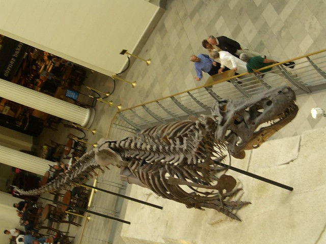 Sue the t rex flickr photo sharing