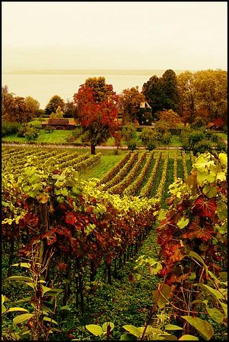 autumn clouds vineyard herbst wolken bodensee weinberg lakeconstance hagnau