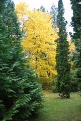 Finch Arboretum, Spokane, Wa,  Oct 2010
