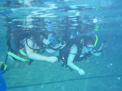swimming, sports, recreation, outdoor recreation, underwater sports, water sport,
