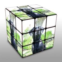 window(0.0), glass(0.0), lighting(0.0), stained glass(0.0), rubik's cube(1.0),