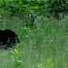 Bear and cub