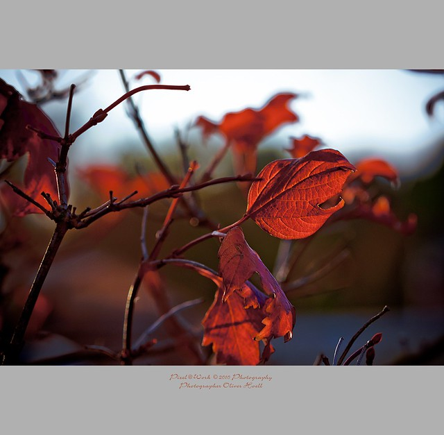 . ..autumn leafs.. .