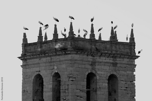Auñón (Guadalajara), cigüeñas y escudo en la torre