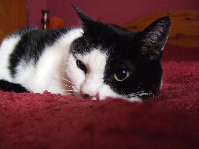 Cassie on bed