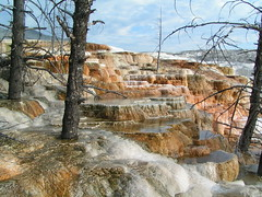 Mammoth Hot Springs 	   Canary Spring