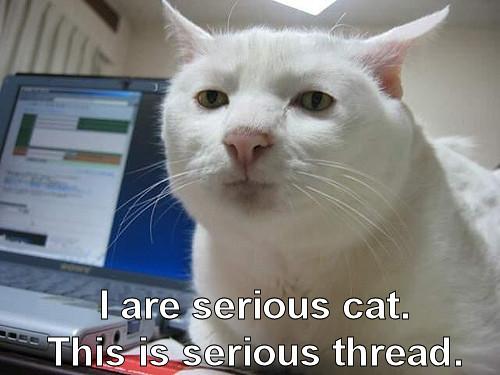 1361976303 566e8aedf3 funny cat 1