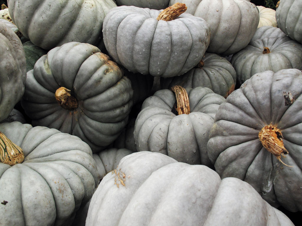 Blue-Gray Pumpkins