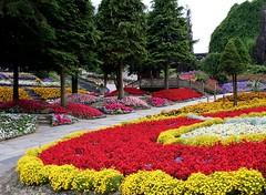 Blomster i Jesperhus