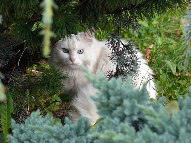 White Cat in the Wild