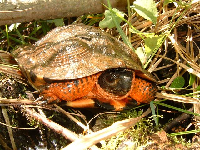 Turtle Natural Food