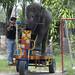 Elephant Rides A Bike