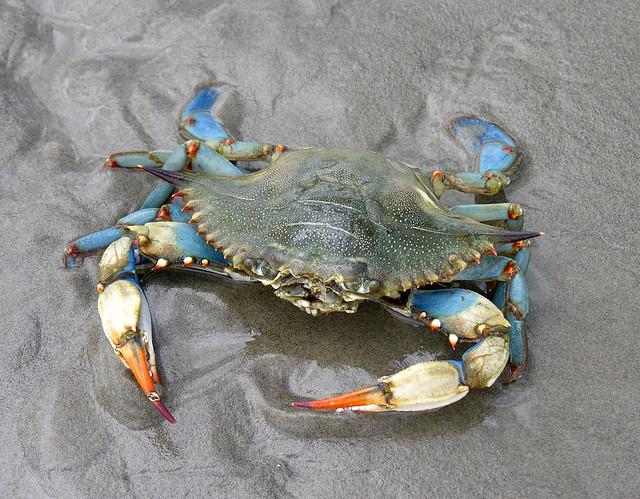 Louisiana Blue Crab Cake Recipe