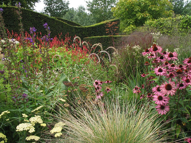 Grasses, perennials and yew hedges