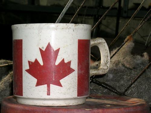 CANADA CUP DSCN1992