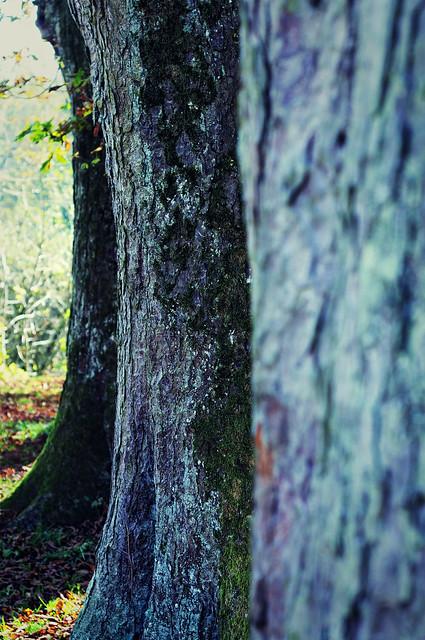 Bokeh Trees