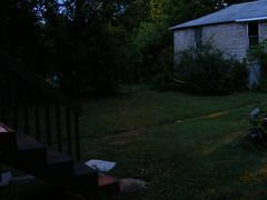 Fireflies 7
