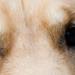 Luke's eyes by Gilberto Gaudio