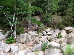 Purcaraccia au point IGN 989 : restes de l'usine à bois avec vestiges de tuyaux métalliques