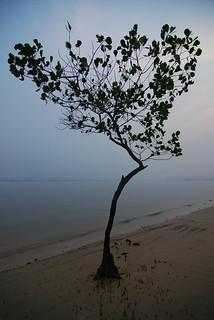 Pasir Ris Park (Area 2) 185 मीटर की लंबाई के साथ समुद्र तट की छवि. pasirris singapore asia tokina1224mm tree vegetal beach haze