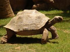 Tortoise Tom