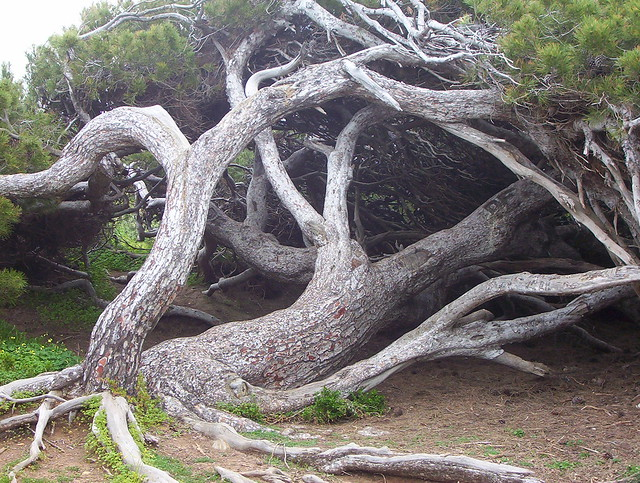 Coastal tree sculpture