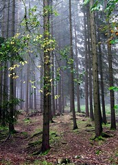 Hiking in the Thuringian Forest by Linda6769