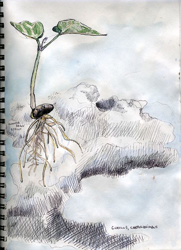 Sketchbook: Bean Sprout and Clouds