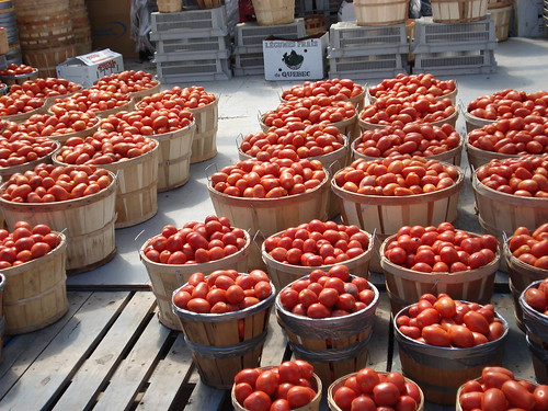 Bushels of tomatoes at Jean Talon market