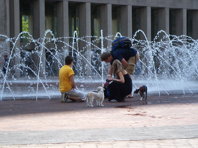 dogs and the fountain