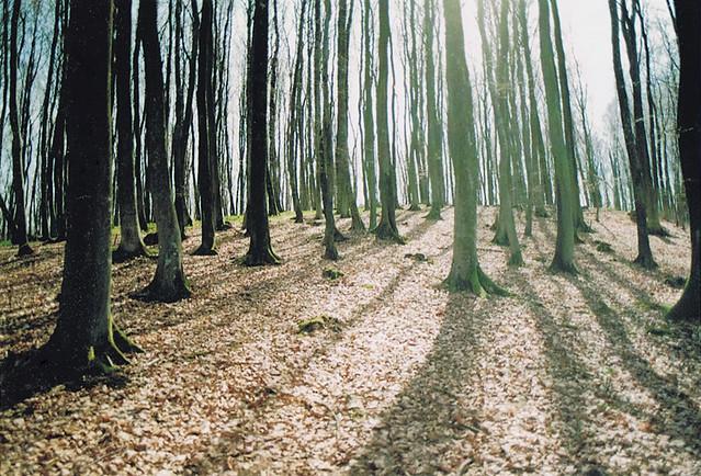 rügenwaldr., Canon AE-1