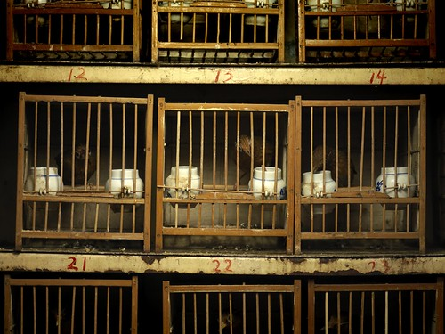 Caged birds at the market, Shangai, China