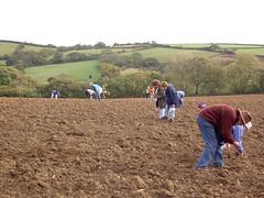 crop(0.0), agriculture(1.0), farm(1.0), sowing(1.0), field(1.0), soil(1.0), plain(1.0), farmworker(1.0), rural area(1.0), grassland(1.0), plantation(1.0),
